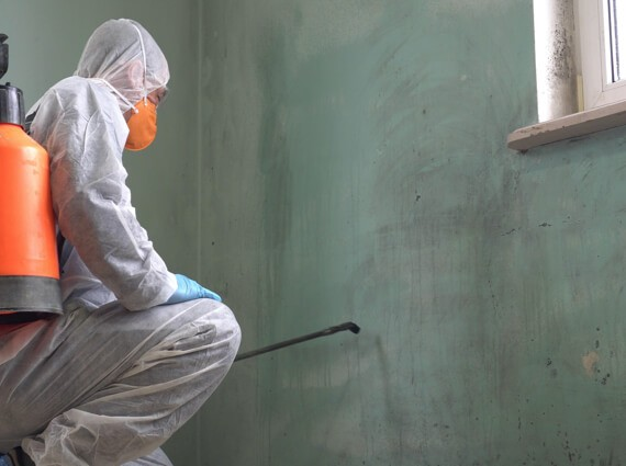 A First Response Cleaning mold removal specialist cleans and removes mold from the walls of an Ottawa home