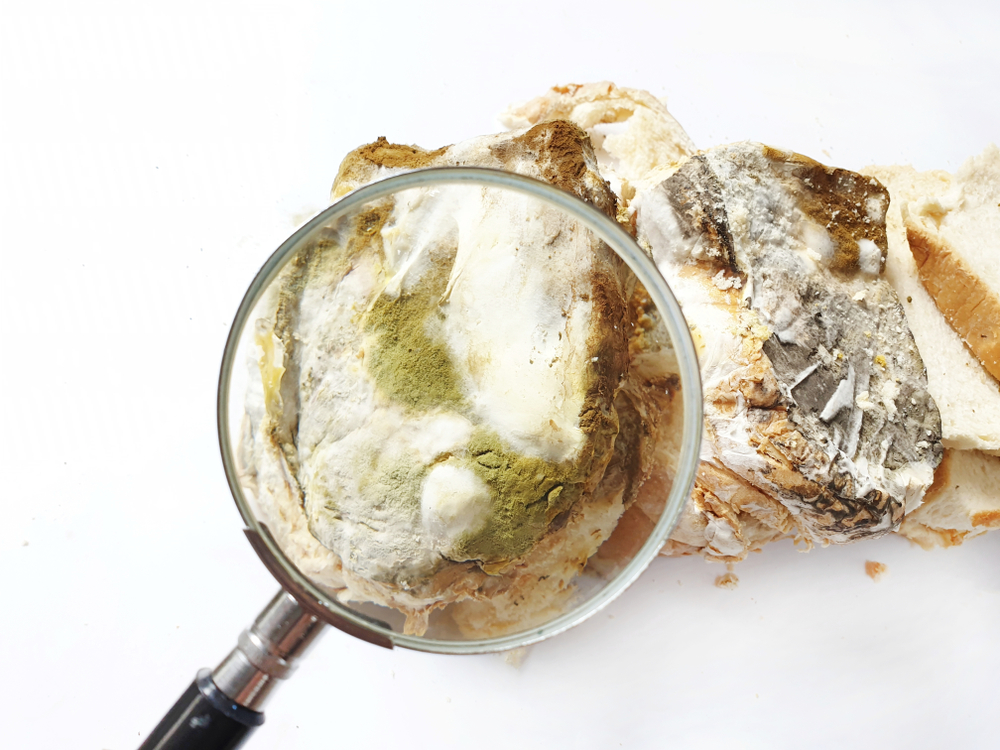 magnifying glass exposes mould