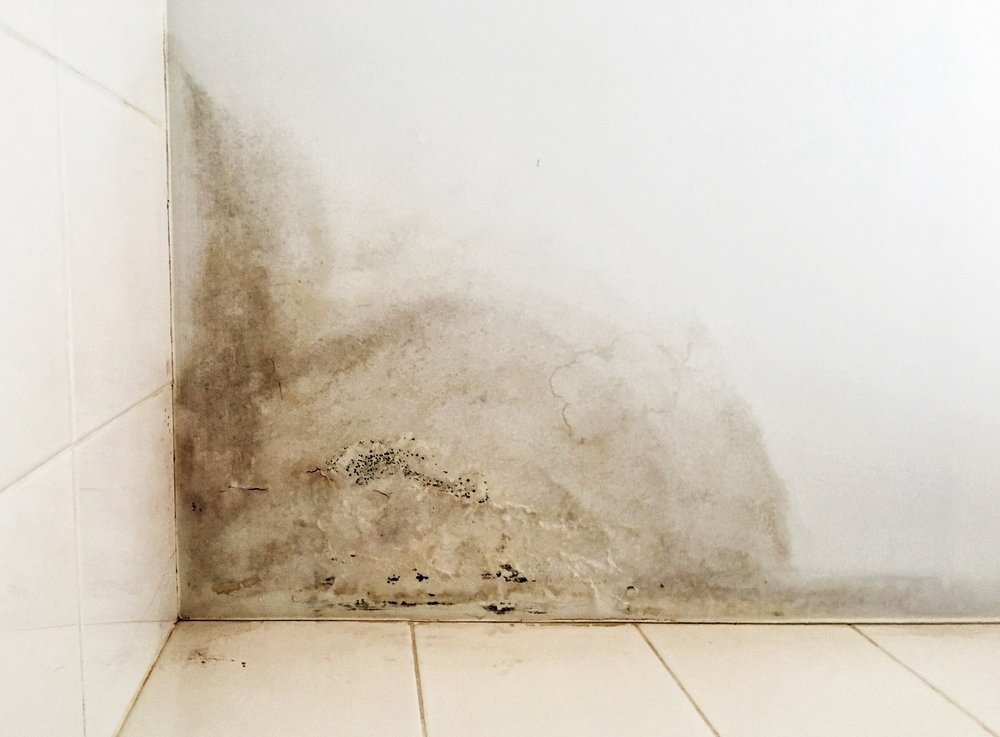 mould in house in belleville ontario