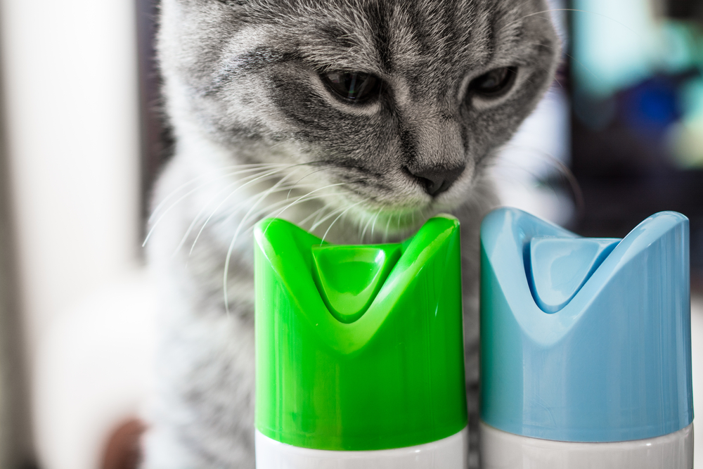 homeowner covers up pet odor with chemicals