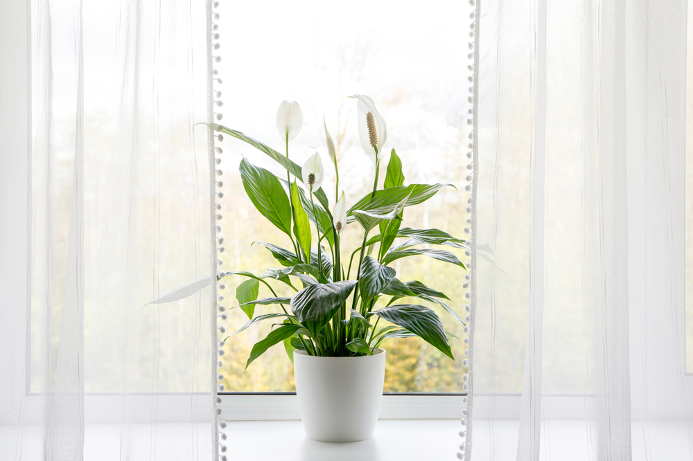 plant at home in clean indoor air